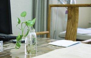 Büropflanze